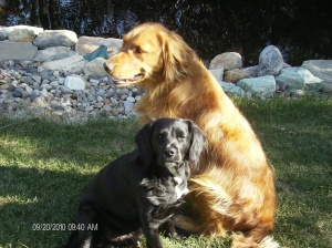 The Best Dogs in the World