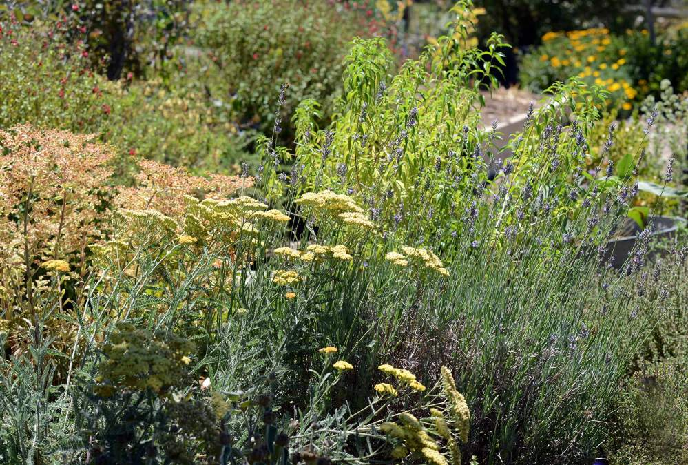 Herb-garden_DSC_5872
